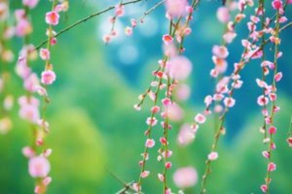 易占元舗かんじんや 象数学で占う2月の運勢【2月4日~3月6日】