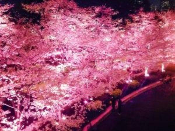かんじんや丈乃丞のつぶやきー 如月 春分次候:桜始開(さくらはじめてひらく)