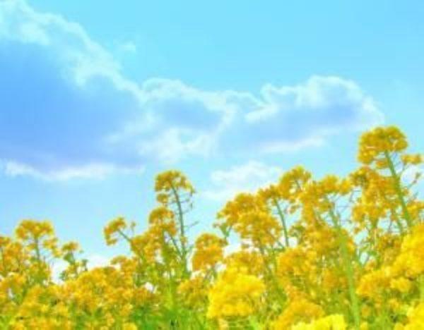 易占元舗かんじんや 象数学で占う毎日の運勢【3月7日】~春の芽吹き~