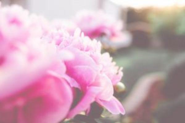 かんじんや丈乃丞のつぶやきー 卯月 穀雨末候:牡丹華(ぼたんはなさく)