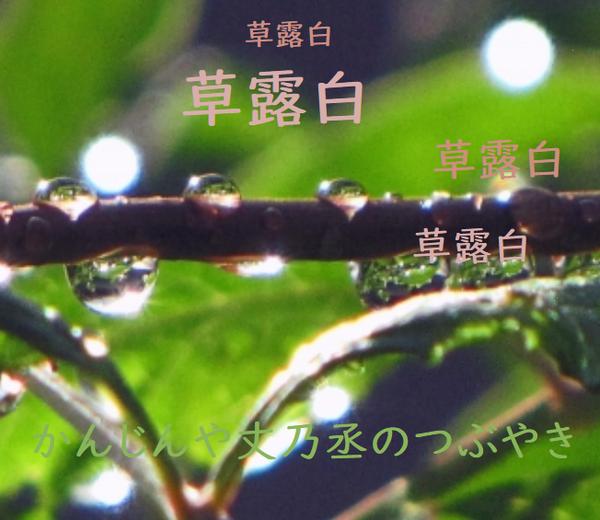 かんじんや丈乃丞のつぶやき -長月 白露 初候: 草露白(くさのつゆしろし)