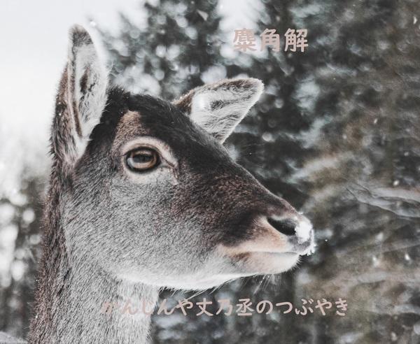 かんじんや丈乃丞のつぶやき -師走 冬至 次候:麋角解(さわしかのつのおつる)