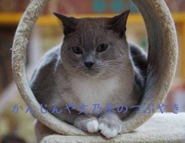 かんじんや丈乃丞のつぶやき - 猫が働くカフェ