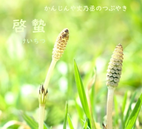 かんじんや丈乃丞のつぶやき 弥生 啓蟄(けいちつ)