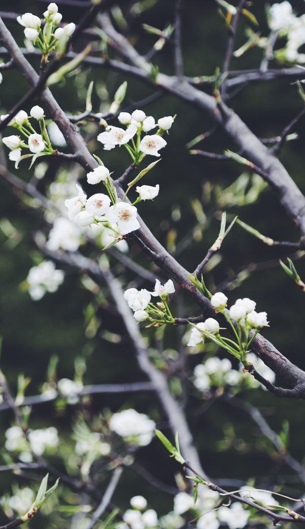 かんじんや丈乃丞のつぶやき 春分(しゅんぶん)