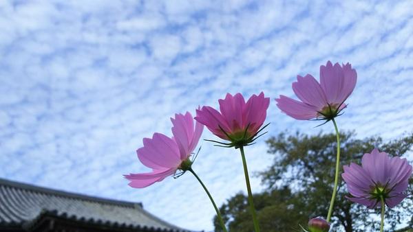 易占元舗かんじんや 象数学®で占う10月(神無月)の運勢【10/8~11/8】
